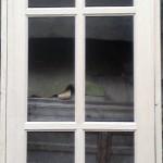 Полуарочный дверной блок. Стекло